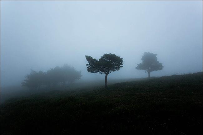 Una foto cambiante de árboles en la niebla.